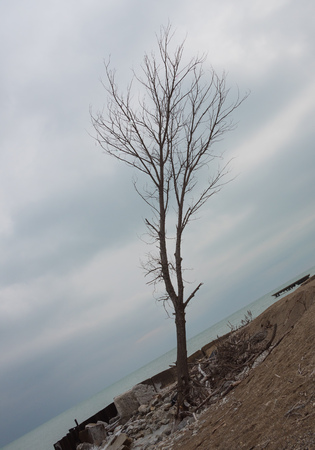 Inclined tree on a beach of Michigan Lake