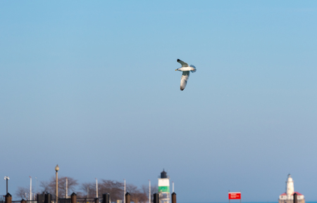 Large seagull flies in the blue sky Stock fotó