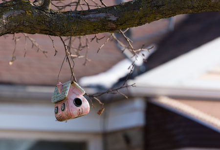 Small birds house on a tree branch