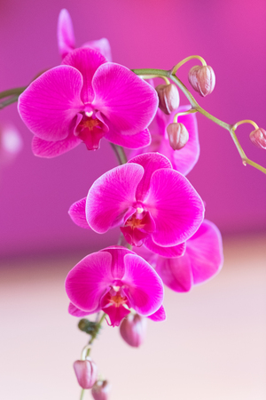 Beautiful colorful orchid in a botanic garden