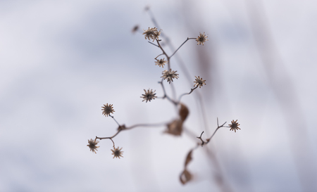 Dry winter flower in a botanic garden