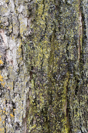 Grey tree bark - high resolution background texture