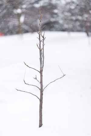 Young tree with no leaves in a winter snow Stock fotó