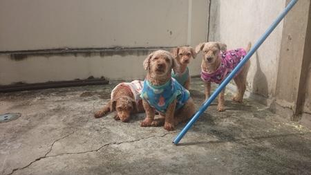 gang: banda de perro Foto de archivo