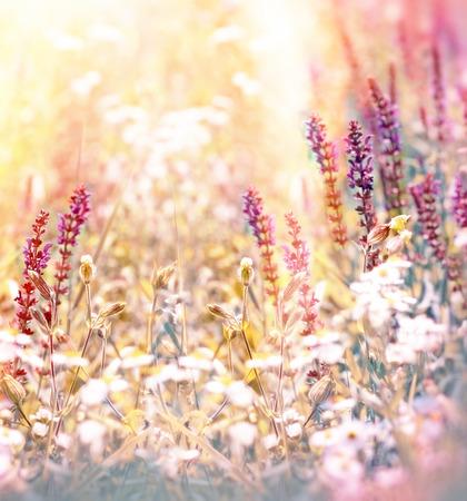 Fleurs de pré Banque d'images