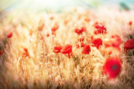 Łąka kwiatów - kwiaty maku