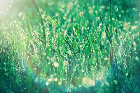 morning dew: Morning dew on the grass in spring Stock Photo