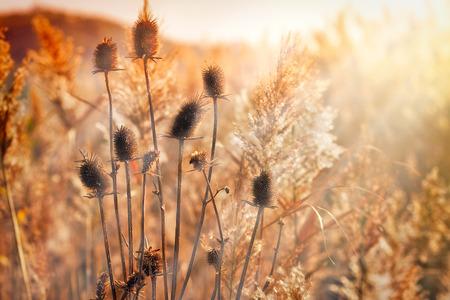 Autumn morning in meadow  field