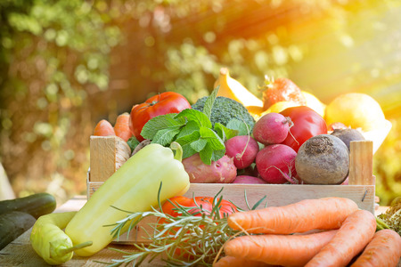 fresh vegetable: Fresh organic vegetables