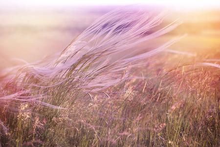 Fluffy grass - softness high grass Stock Photo