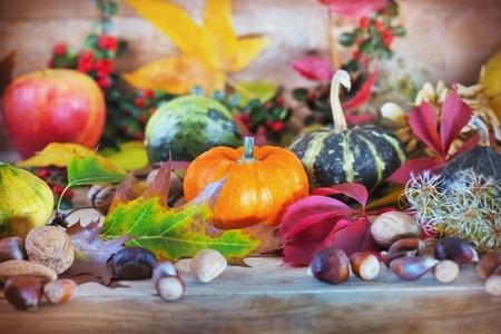 豐富的秋收 - 秋季水果和蔬菜