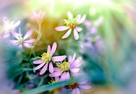 purple flowers: Beautiful purple flowers