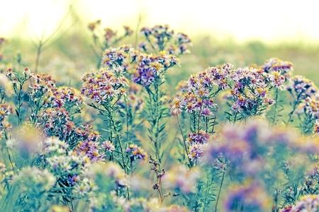 wild flowers: Meadow flowers - wild flowers Stock Photo