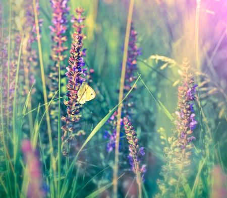 白の草原で紫の花に蝶