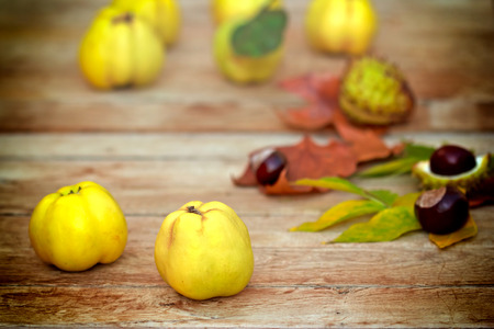 quinces: Quinces on the table Stock Photo