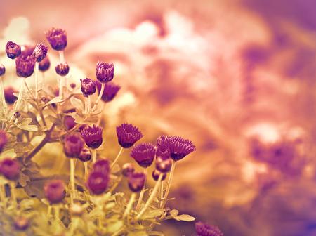 purple flower: Pink flower - purple flower in a meadow