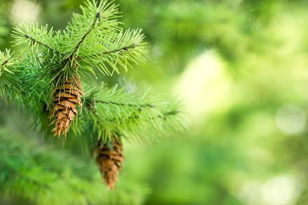 suprise: Beautiful Christmas tree