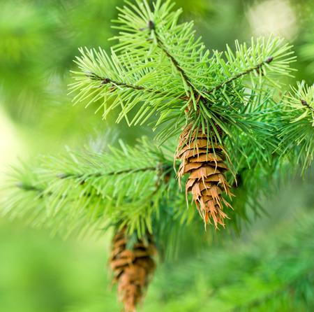 Kegel auf Weihnachtsbaum Lizenzfreie Bilder