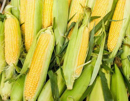 新鮮的有機玉米