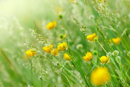 yellow: Beautiful yellow flowers