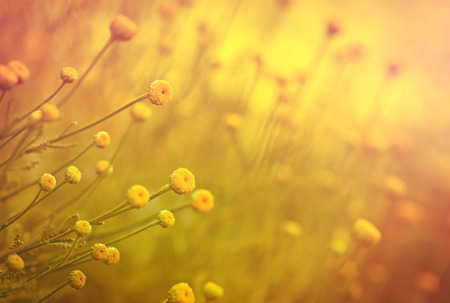 Hermosa flores amarillas Foto de archivo - 43619438