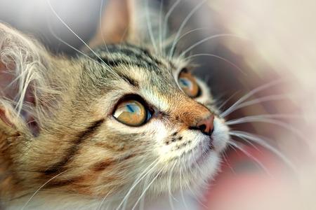 full blooded: Cute kitten Stock Photo