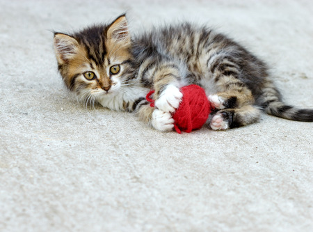 adroitness: Little kitten playing with ball of wool Stock Photo