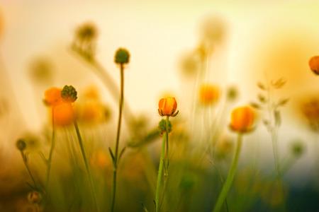 盛開的黃色小草地上的花兒