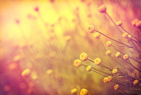 El enfoque suave en las flores amarillas