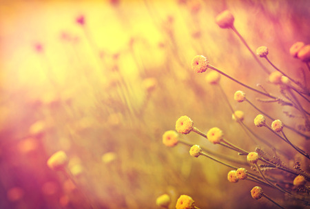 Soft focus on yellow flowers