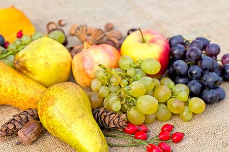 harvest organic: Autumn harvest - organic fruits Stock Photo