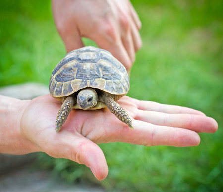 schildkroete: Schildkröte in der Hand - auf der Palme