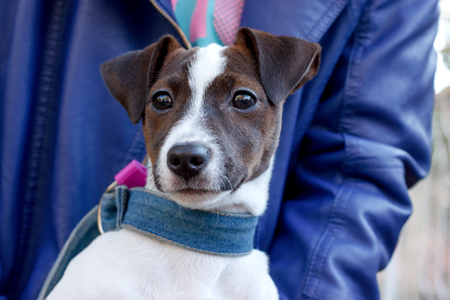 endear: Dog Jack Russell - Terrier
