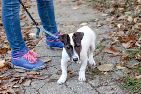 endear: Little dog Jack Russell - Terrier
