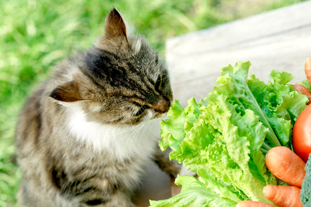 adroitness: Pet - cat knows what is healthy food Stock Photo