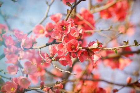 blooming: Blooming branch