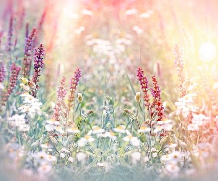 spring summer: Wild meadow flowers