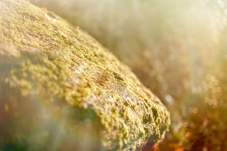 sunrays: Stone rock covered with moss, lit by sunrays