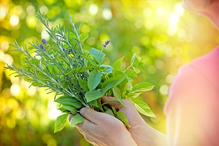 Friss fűszernövények - fűszerek nő kezét