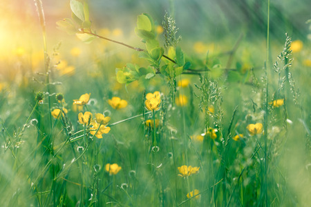 Springtime - beautiful nature flowering - blooming