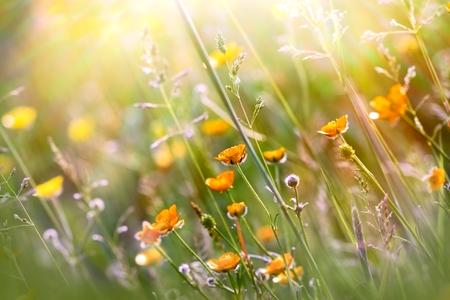 Beautiful nature - Springtimeflowering - blooming