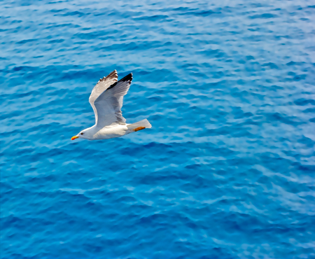 disseminate: Seagull flying above the sea