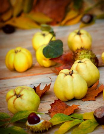 quinces: Autumn fruit - quinces Stock Photo