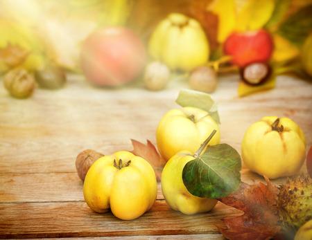 quinces: Quinces - Autumn fruit lit by sun rays Stock Photo