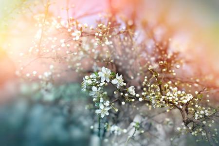 budding: Budding buds - beautiful spring