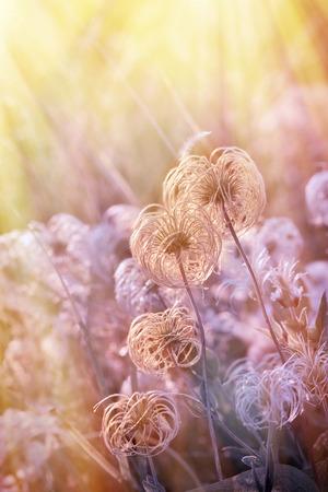 softness: Fluffy - softness flower