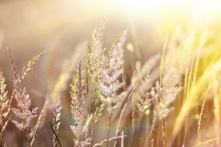 selective focus: High spring grass illuminated by sunlight - sunbeams Stock Photo