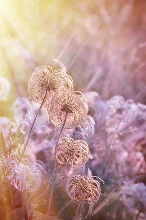 softness: Beautiful softness flower - fluffy flower