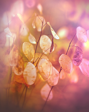 noxious: Beautiful dry plant - seeds in autumn