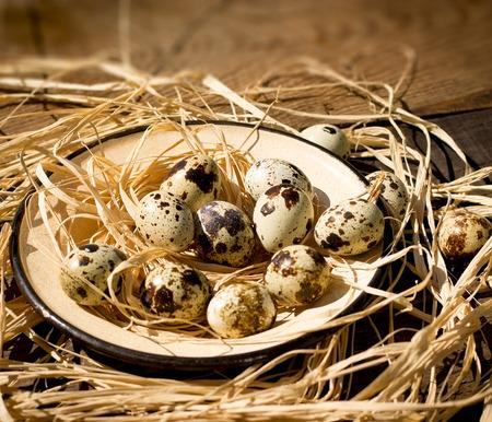 codorniz: huevos de codorniz en placa